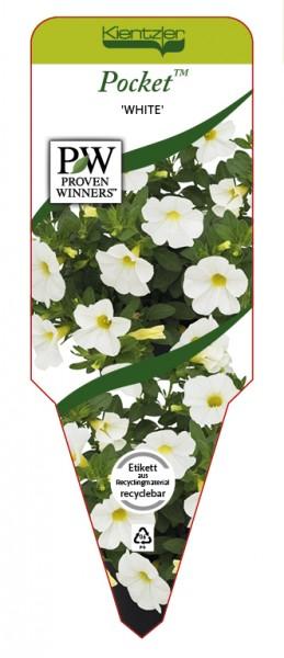 Calibrachoa Hybr. Pocket 'White'