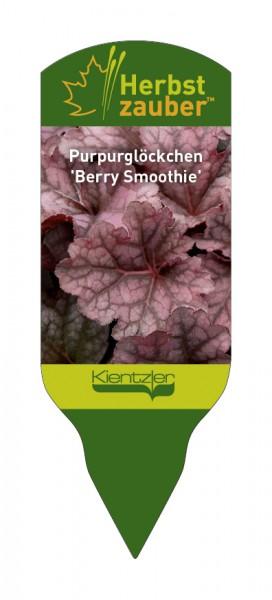 Heuchera Hybride villosa 'Berry Smoothie'