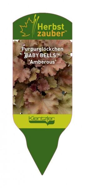 Heuchera BABY BELLS 'Amberous'