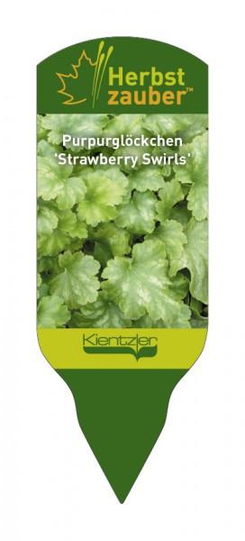 Heuchera Hybride 'Strawberry Swirls'