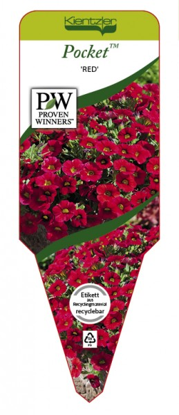 Calibrachoa Pocket 'Red'