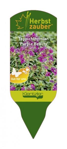 Thymus serpyllum 'Purple Beauty'