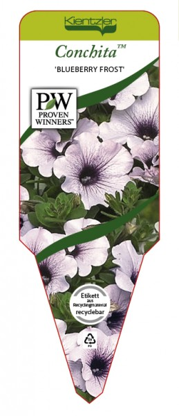 Petunia Hybr. Conchita™ 'Blueberry Frost'