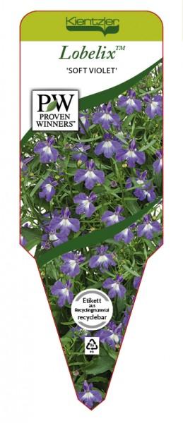 Lobelia Lobelix™ 'Soft Violet'