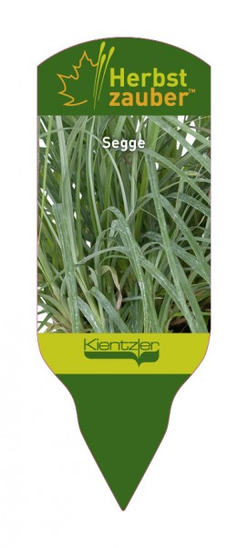 Carex flaca
