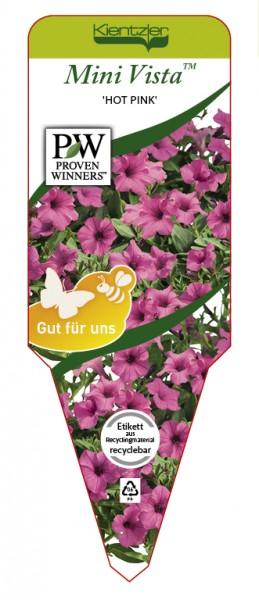 Petunia Hybrid Mini Vista 'Hot Pink'