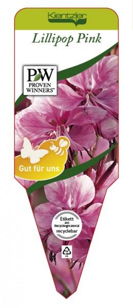 Gaura lindheimeri 'Lillipop Pink'
