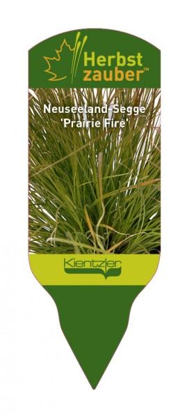 Carex 'Prairie Fire'