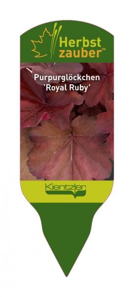 Heuchera Hybride 'Royal Ruby'