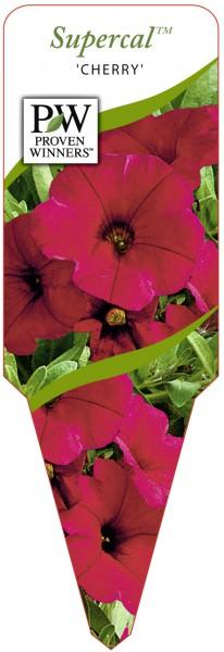 Petunia x Calibrachoa Supercal™ 'Improved Cherry'