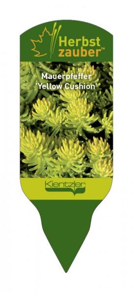 Sedum reflexum 'Yellow Cushion'