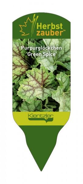 Heuchera Hybride 'Green Spice'