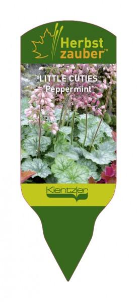 Heuchera 'Little CUTIES Peppermint'