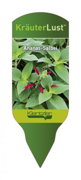 Salvia rutlans 'Ananassalbei'