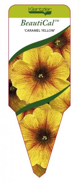 Petchoa BeautiCal 'Caramel Yellow'