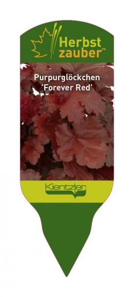 Heuchera 'Forever Red'