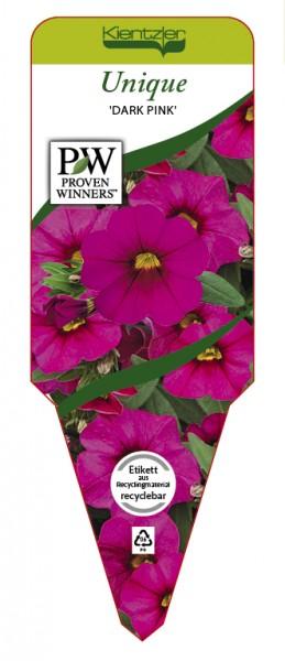 Calibrachoa Hybr. Superbells™ UNIQUE 'Dark Pink'