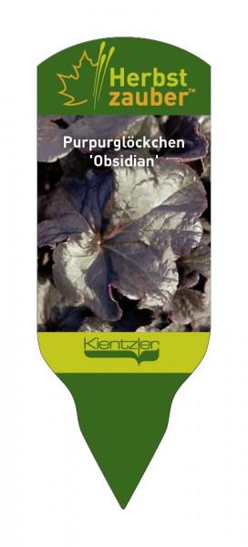 Heuchera Hybride 'Obsidian'