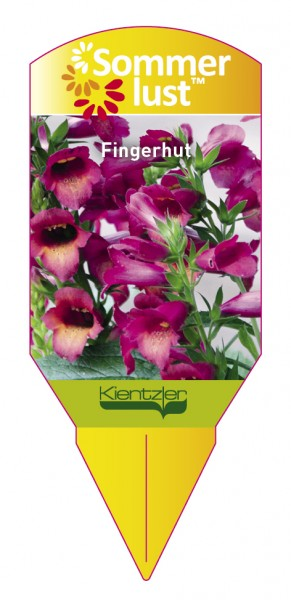 Digitalis x Isoplexis Illumination Raspberry