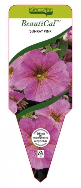 Petchoa BeautiCal 'Sunray Pink'