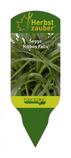 Carex 'Ribbon Falls'