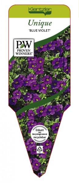 Calibrachoa Hybrid Unique 'Blue Violet'