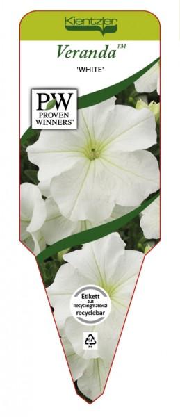 Petunia Veranda 'White'