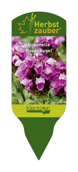 Prunella™ 'Rosenkugel'