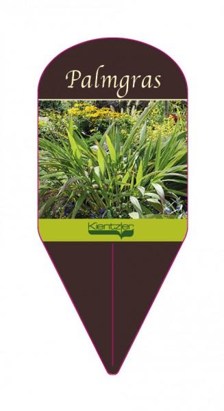 Setaria palmfolia