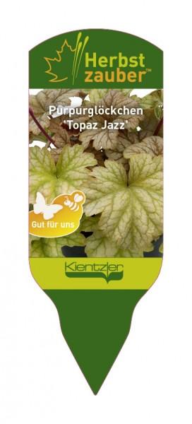 Heuchera 'Topaz Jazz'