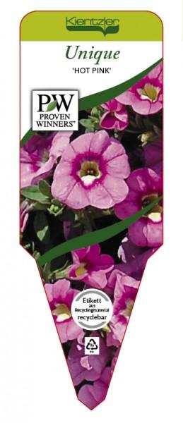 Calibrachoa Hybr. Superbells™ UNIQUE 'Hot Pink'