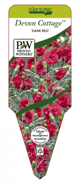 Dianthus Devon Cottage™ 'Dark Red'