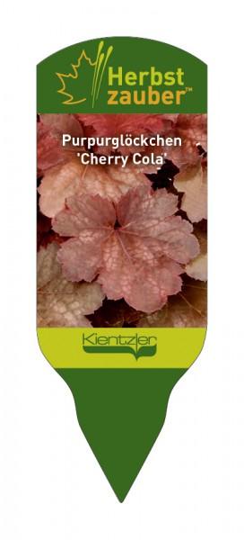Heuchera Hybride 'Cherry Cola'