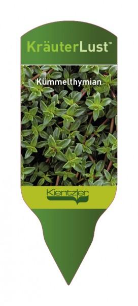 Thymus herba-bar. Kümmelthymian