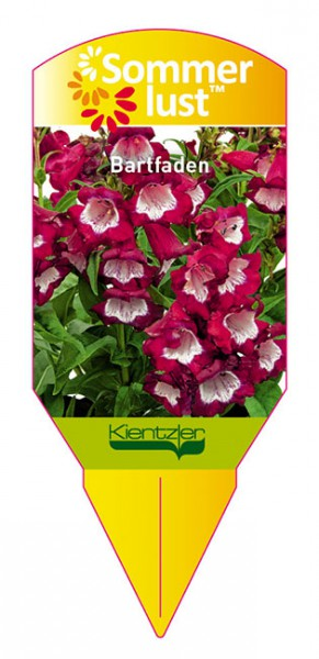 Penstemon Pentastic 'Red'