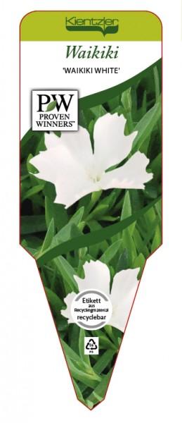 Dianthus WAIKKI 'white'