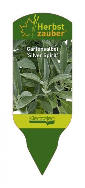 Salvia officinalis 'Silver Spirit'