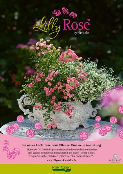 Poster LillyRose