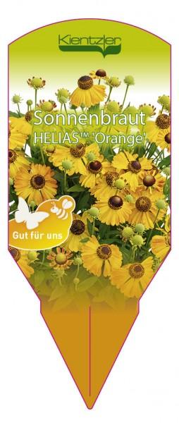 Helenium helias 'Orange'