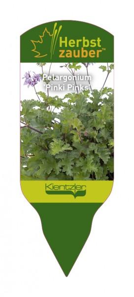 Pelargonium 'Pinki Pinks'
