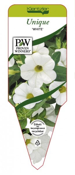 Calibrachoa Hybr. Superbells™ UNIQUE 'White'