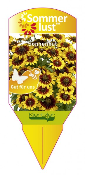 Rudbeckia 'Giggling Smiley'