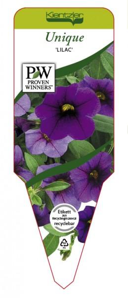 Calibrachoa Hybr. Superbells™ UNIQUE 'Lilac'