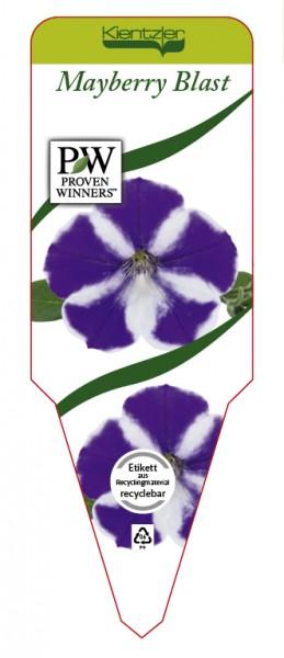 Petunia Hybrid 'Mayberry Blast'