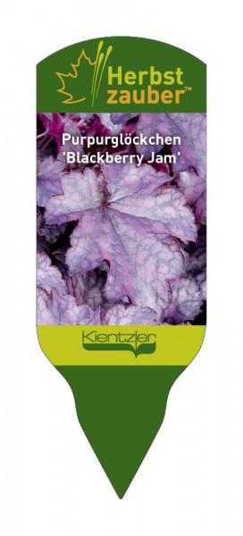 Heuchera Hybride 'Blackberry Jam'