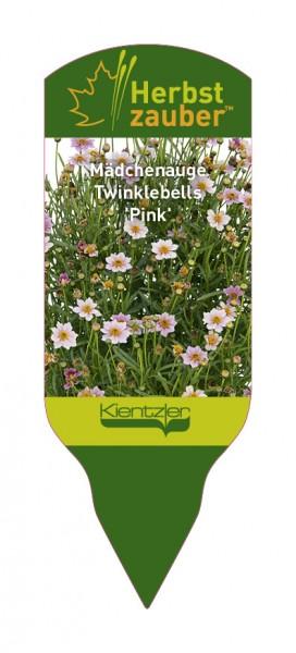 Coreopsis rosea Twinklebells 'Pink'