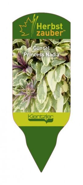 Ajuga 'Princess Nadia'