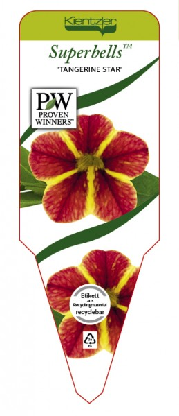 Calibrachoa Superbells 'Tangerine Star'