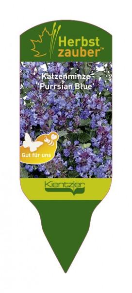 Nepeta Hybride 'Purrsian Blue'