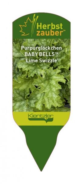 Heuchera BABY BELLS 'Lime Swizzle'